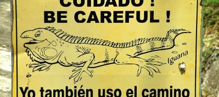 panneau_iguane_amerique_costa_rica_le_long_de_la_panamericaine