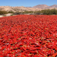 piment rouge chili