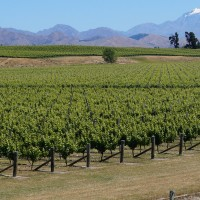 découverte vin nouvelle zélande