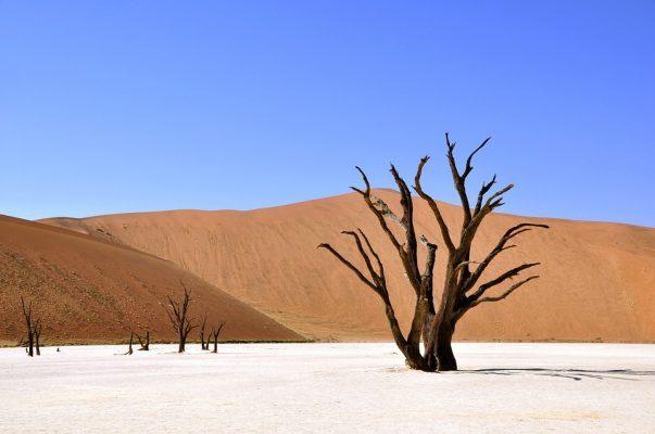 Arbre dans le désert en Namibie