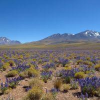 voyage à moto sur la Cordillère des Andes